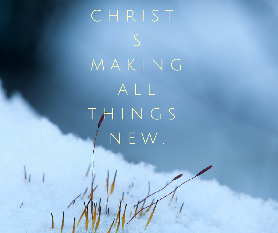"Plants poke up through a blanket of snow, overlaid by the words ""Christ is making all things new""."
