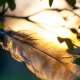 a feather rests on a tree branch, rays of sunshine filter through